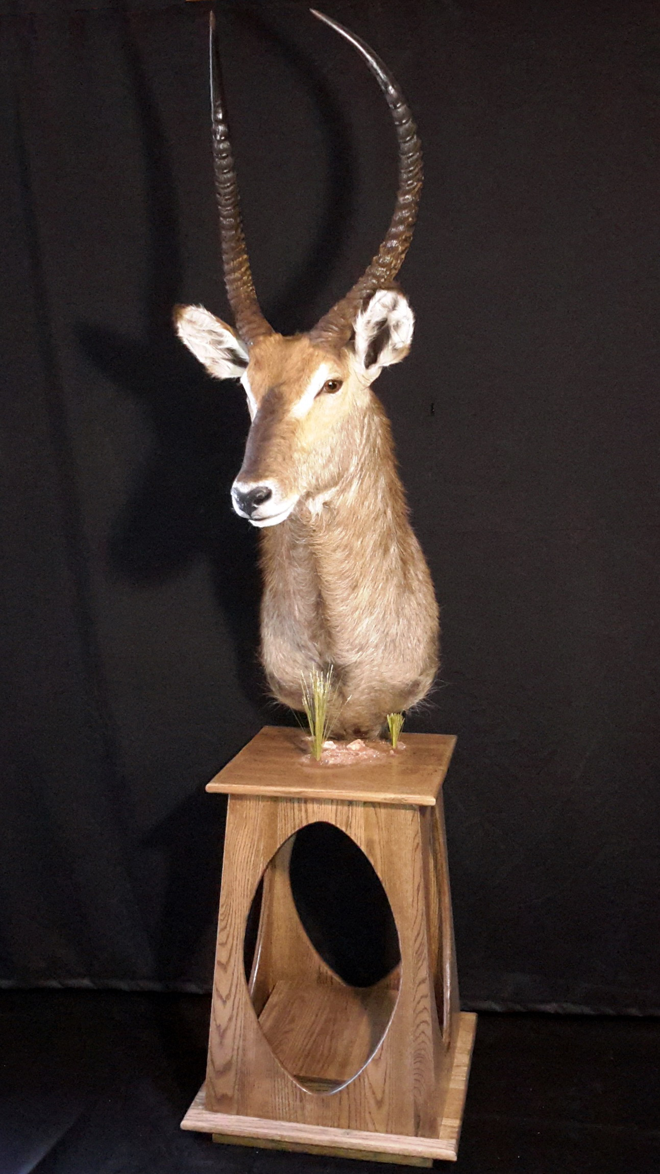 taxidermie 27