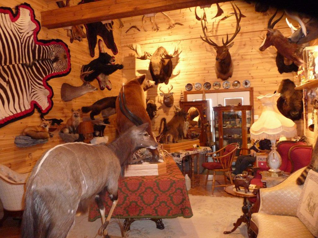 taxidermiste a montreal